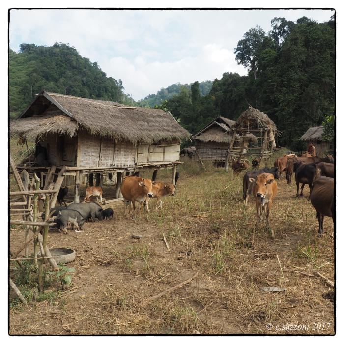 Village Hmong au pied de la montagne