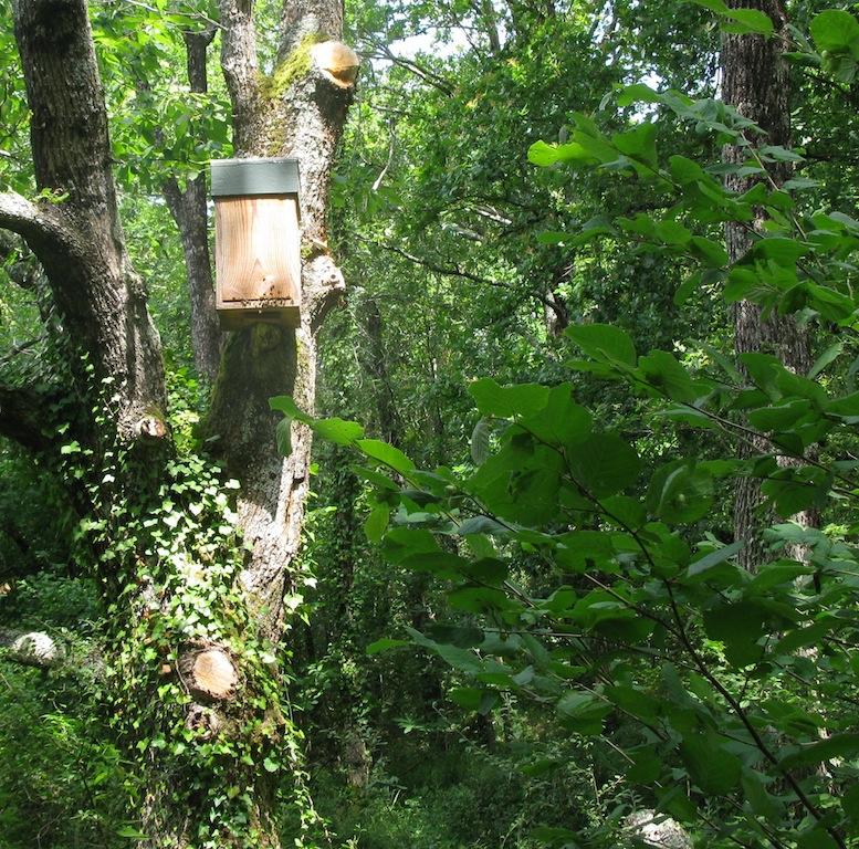 Nichoir expérimental à abeilles mellifères placé dans un bois d'Annepont © Vincent Alboui